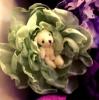 Мишка в розочке