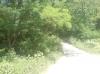 15 соток в мешаном лесу