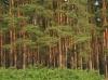 10 соток с выходом в лес