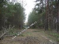 21 сотка з вихідом в ліс