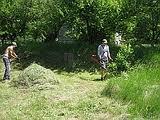 Покос травы, расчистка участков.