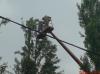 Кронирование деревьев Киев. Обрезка веток. Удаление деревьев Киев. Корчевание, удаление пней.0674093070