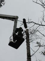 Обрезка деревьев. Спилить дерево Киев 4665942 Кронировка деревьев.