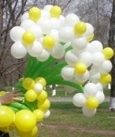 цветы из шаров киев