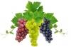 Наномикс-виноград