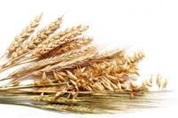 Наномикс зерновые элита (листовая подкормка)