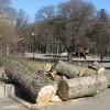 Спил деревьев Киев. Удаление аварийных деревьев Киев.