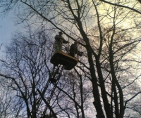 Удаление деревьев Киев. Обрезка деревьев Киев.