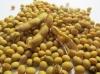 Семена Сои Аполло устойчивой к Раундап (Глифосатам).