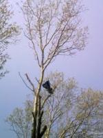 Спил деревьев Киев 0673393531